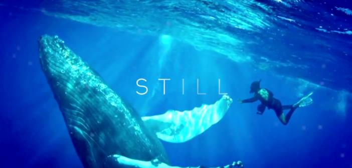 Still Life:  Deep into the Depths