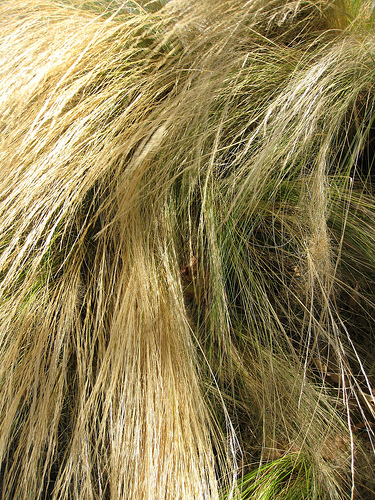 Why Swimming Pools Turn Hair Green It S Not The Chlorine